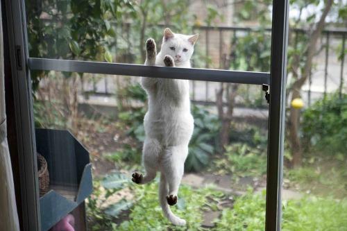 「庭猫」展 安彦幸枝(終了しました)