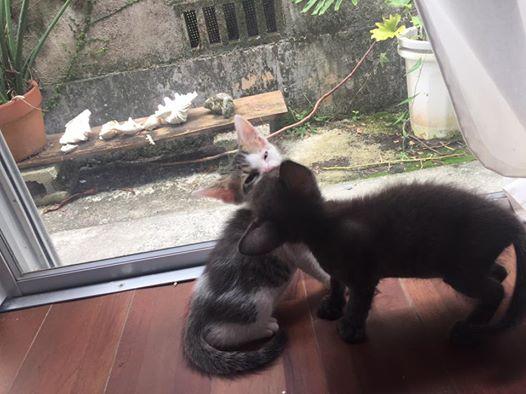 仔猫の里親募集をしています(里親さんと出会いました。ありがとうございます)。